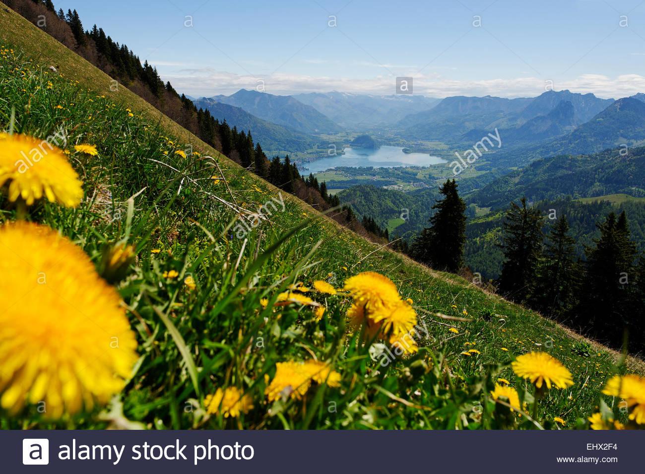 Austria, Salzburg State, View from Zwoelferhorn near Sankt Gilgen to Lake Wolfgangsee and Hoellen Mountains - Stock Image