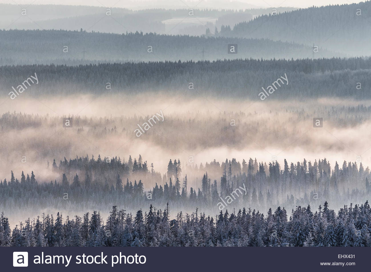 Germany, Saxony-Anhalt, Harz National Park, Coniferous forest and waft of mist in winter - Stock Image