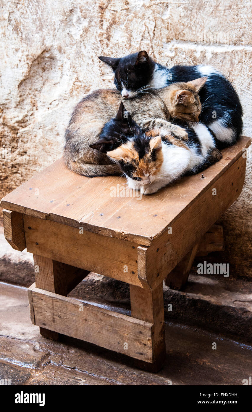 Kittens sleeping in the alleyway, Fes, Morocco - Stock Image