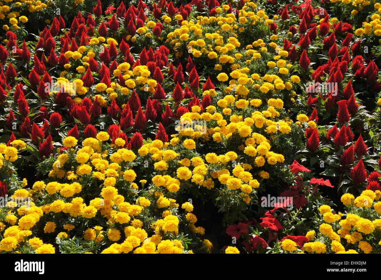 Beautiful flowers besides Streets in Beijing Stock Photo