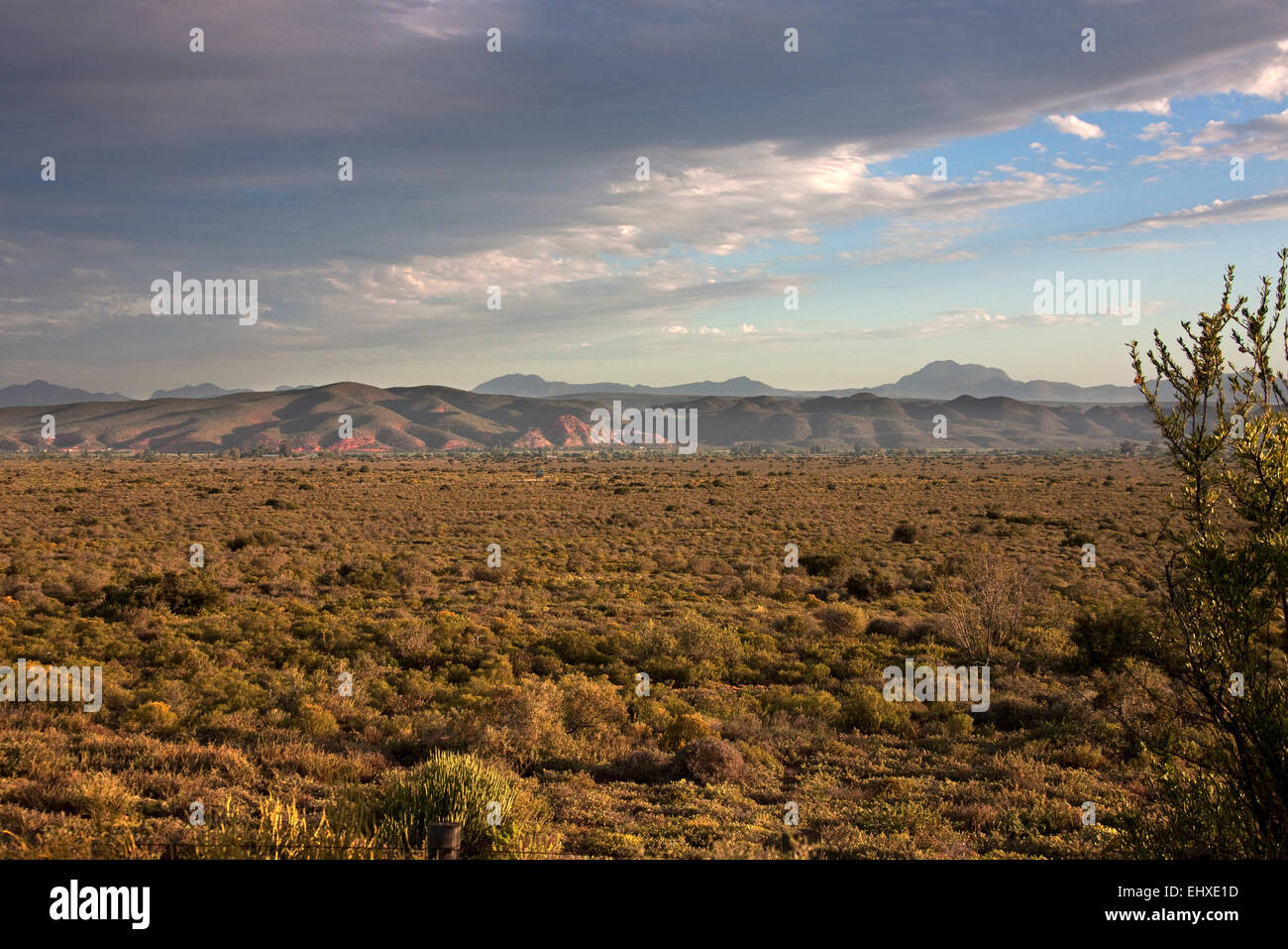 Bush land with mountain range in the background, Oudtshoorn, Oudtshoorn, Western Cape Province, South Africa - Stock Image