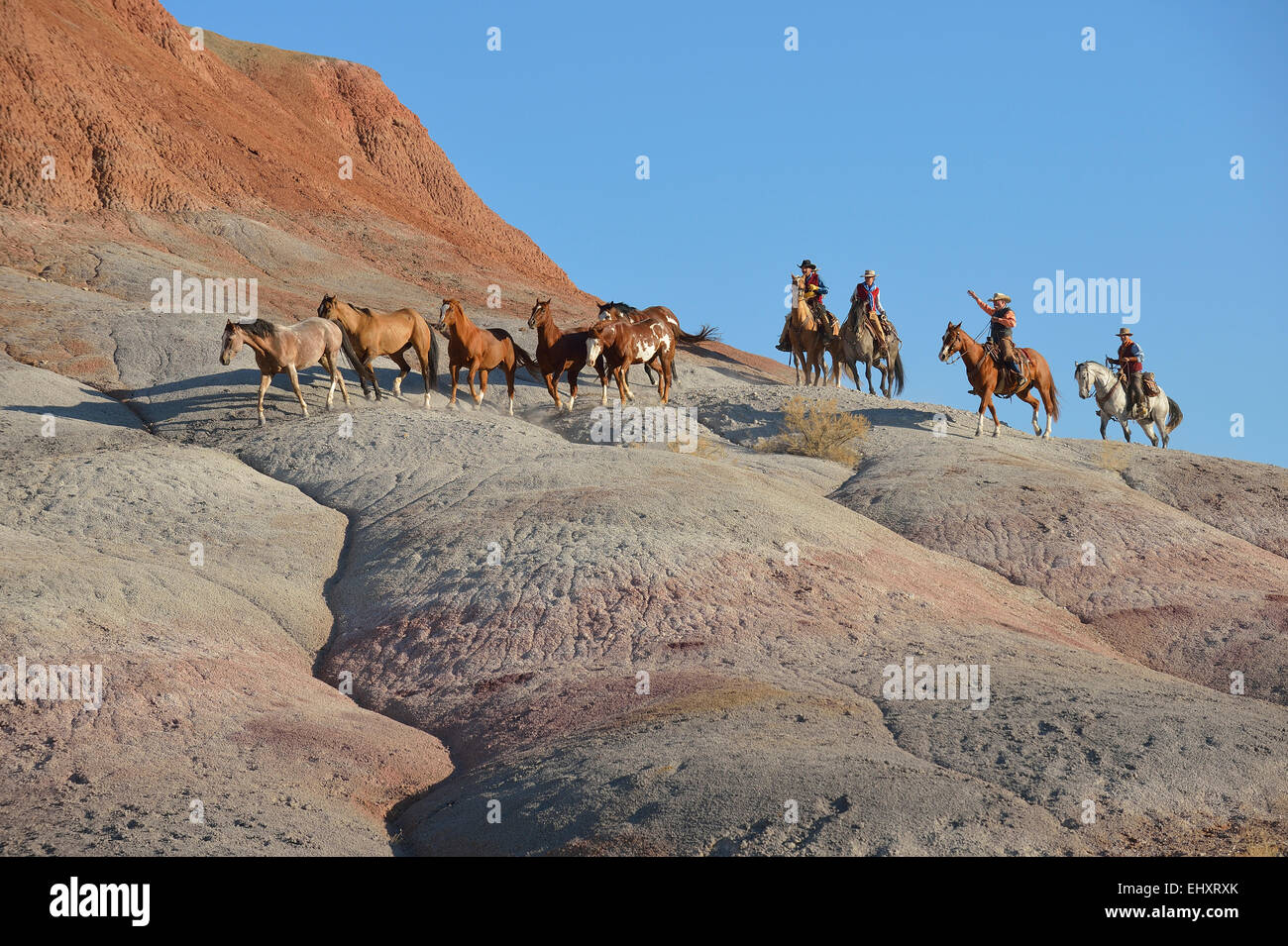USA, Wyoming, cowboys and cowgirls herding horses in badlands - Stock Image