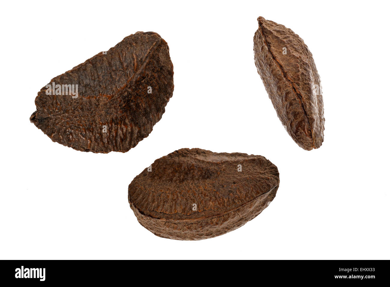 Excelsa Plant Stock Photos & Excelsa Plant Stock Images - Alamy