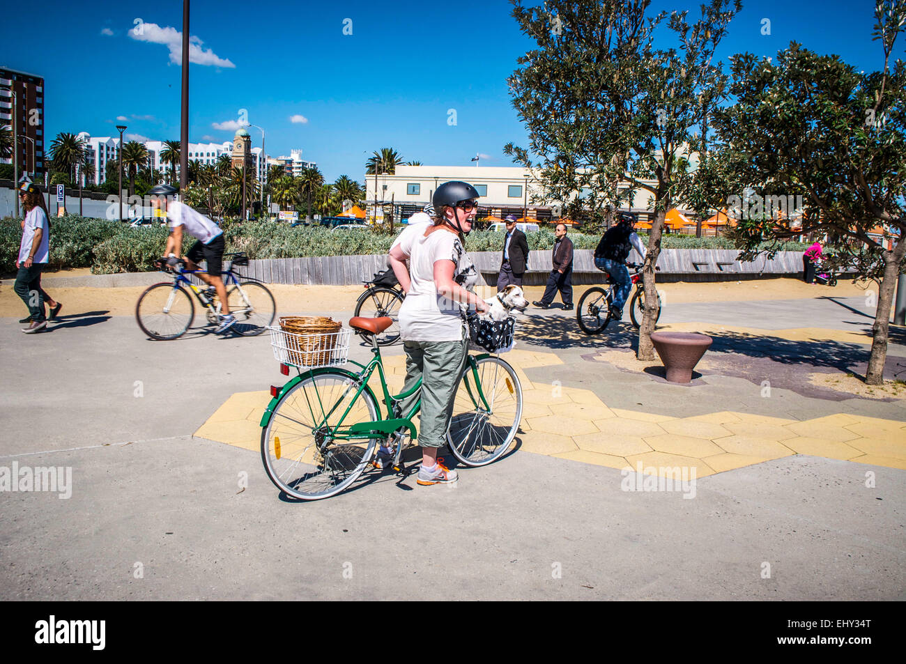 Woman giving her small dog a ride in her bicycle basket. Unidentified people cycling and walking in St. Kilda, a - Stock Image