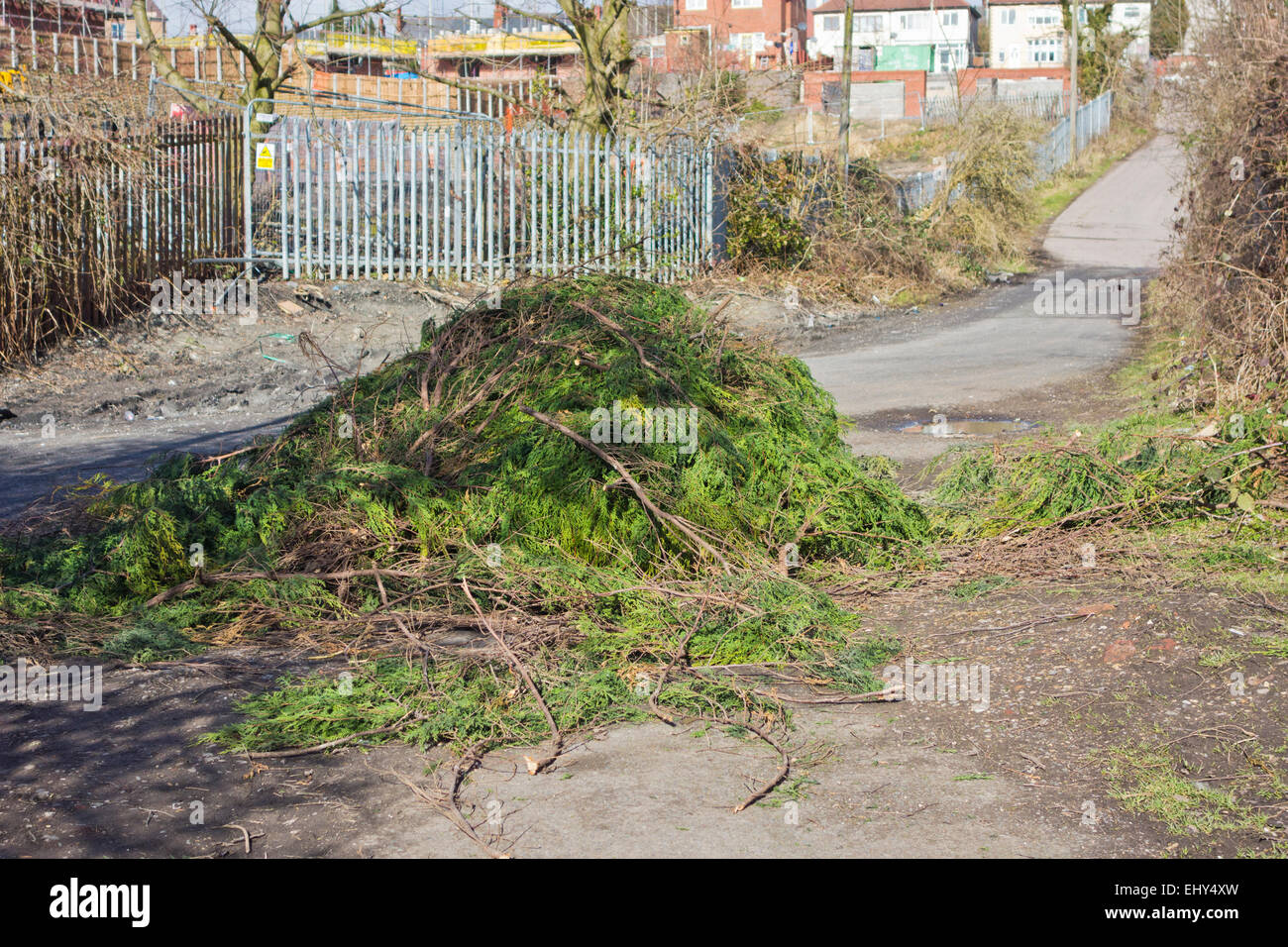 Dumped Fly Tipped Conifer Branches in a Minor Lane, Brierley Hill, West Midlands, England, UK - Stock Image