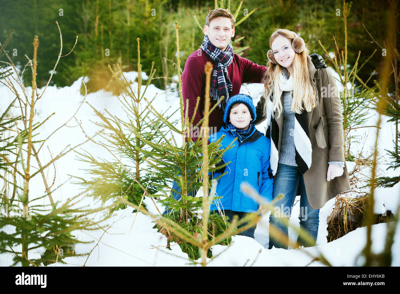 Family searching for the perfect Christmas tree - Stock Image
