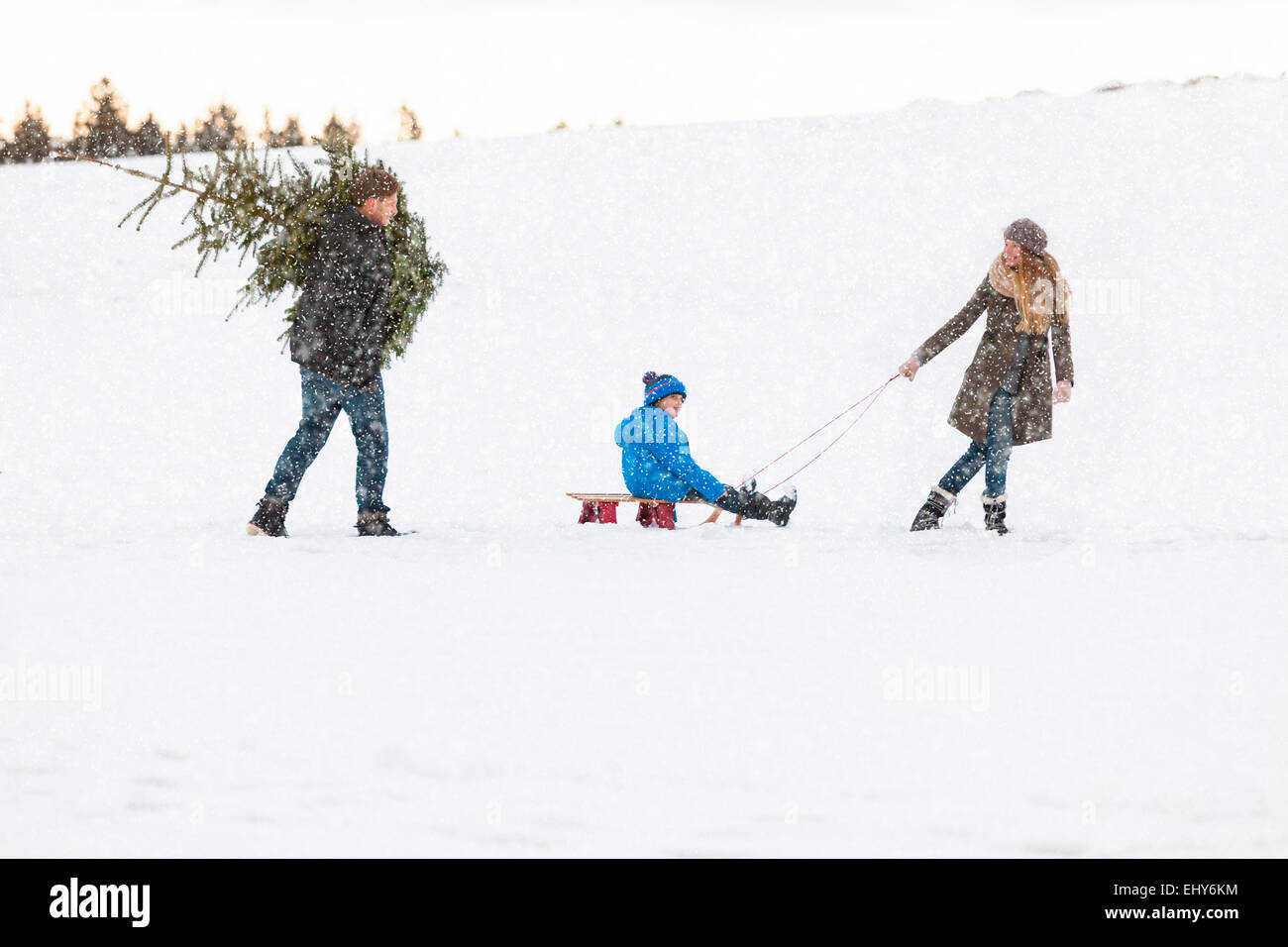 Family carries the perfect Christmas tree in snowy landscape - Stock Image