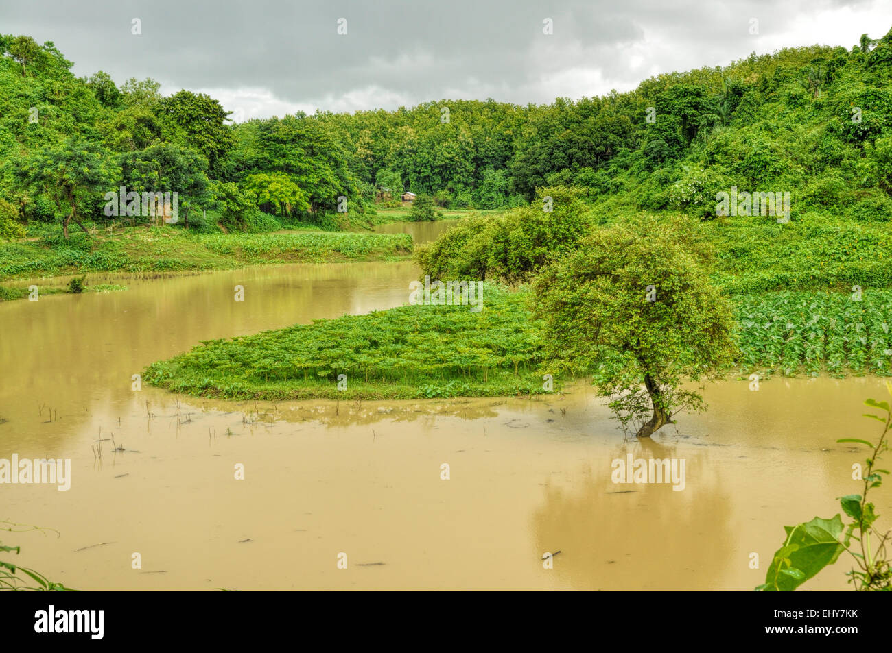 River flooding green fields in Bangladesh - Stock Image