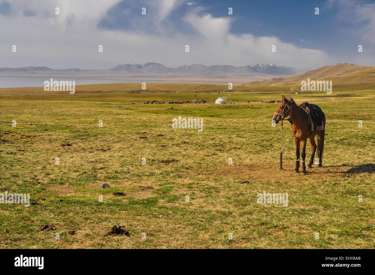 Horse on scenic grassy mountainous landscape in Kyrgyzstan - Stock Image