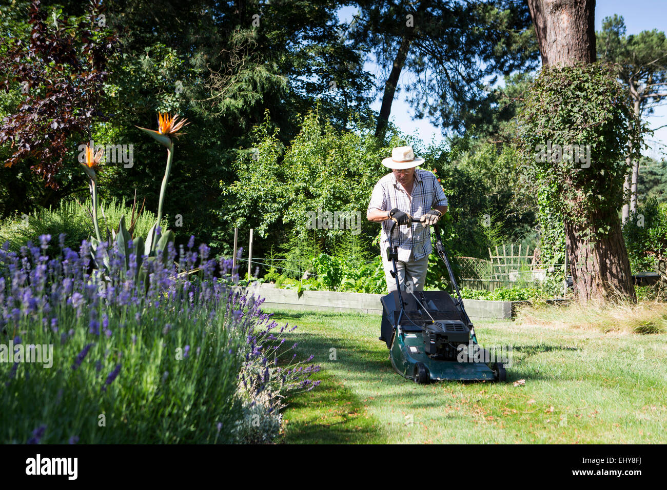 Senior man mows garden lawn, Bournemouth, County Dorset, UK, Europe - Stock Image