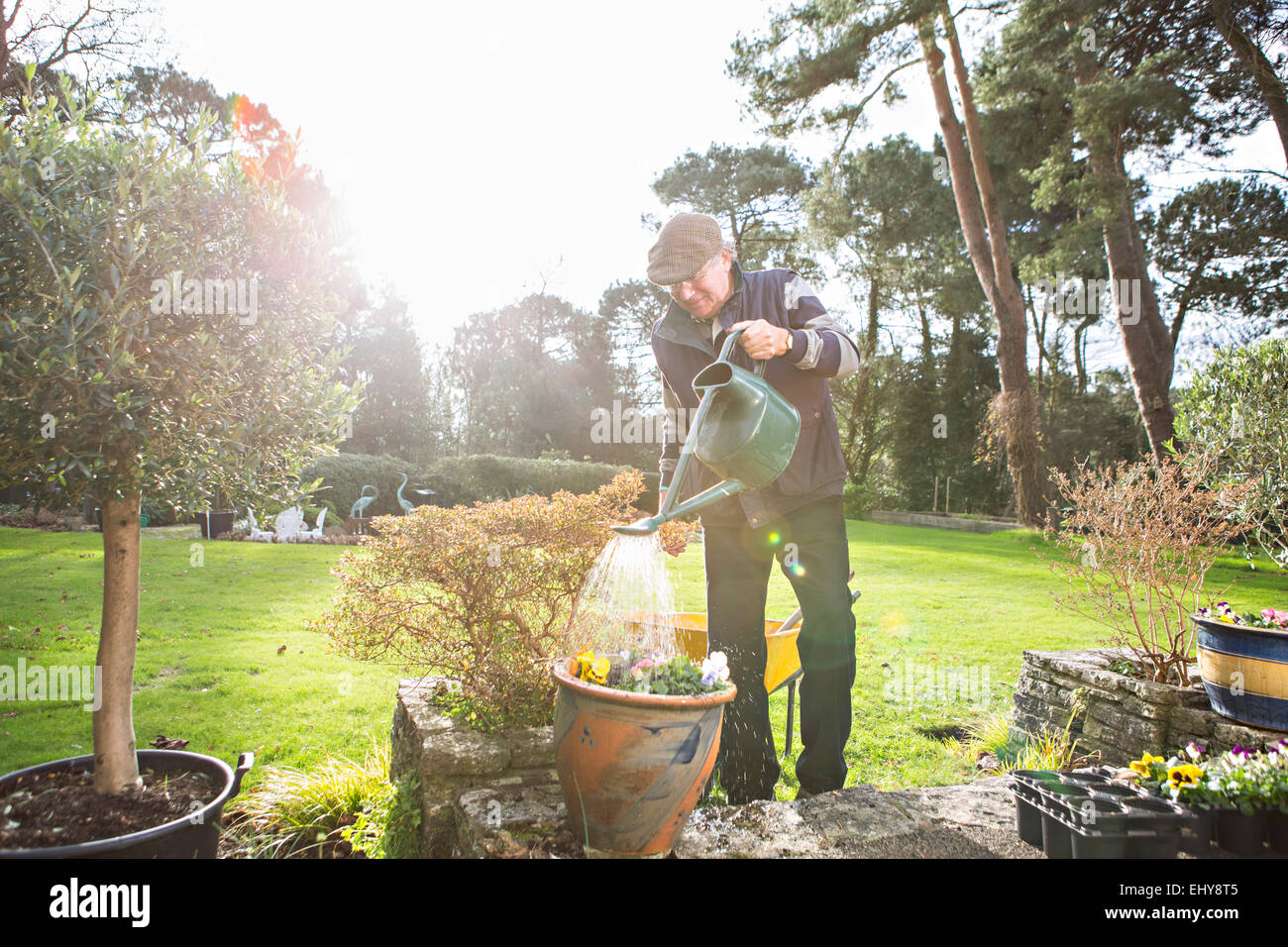Senior man watering flowers in garden, Bournemouth, County Dorset, UK, Europe - Stock Image