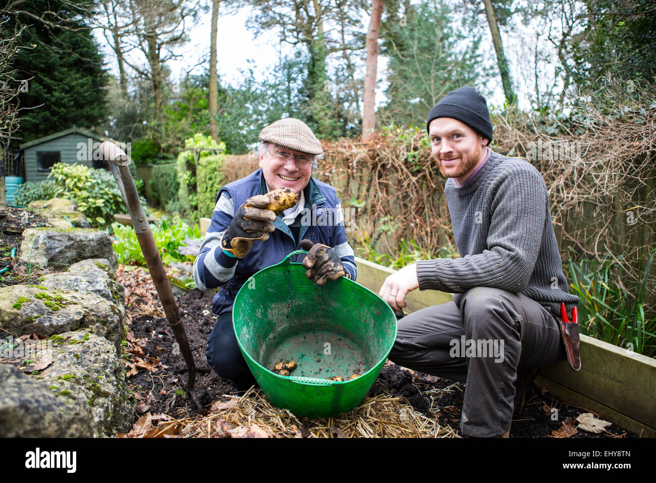 Two men harvesting potatoes, Bournemouth, County Dorset, UK, Europe - Stock Image