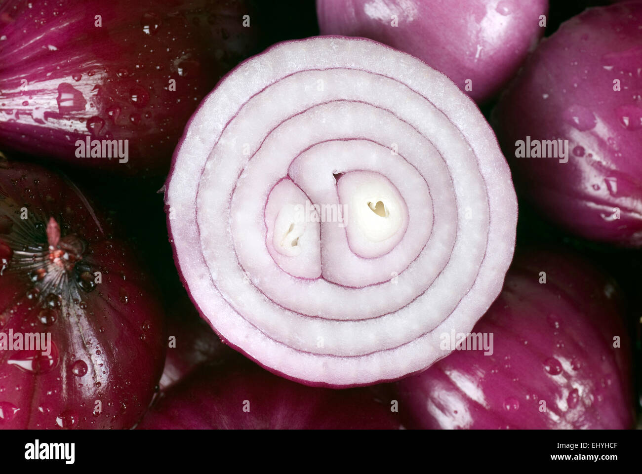 Red onion background close up full frame. - Stock Image