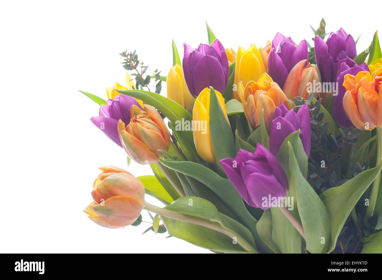 Mixed color tulips on white background. - Stock Image
