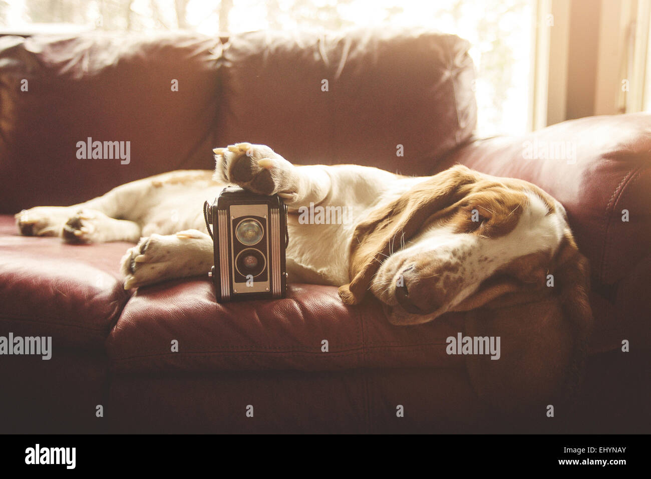 Dog lying on the sofa with a vintage camera - Stock Image