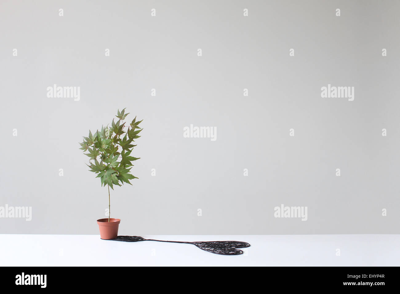 Tree in a pot casting a  heart shaped shadow on a table - Stock Image