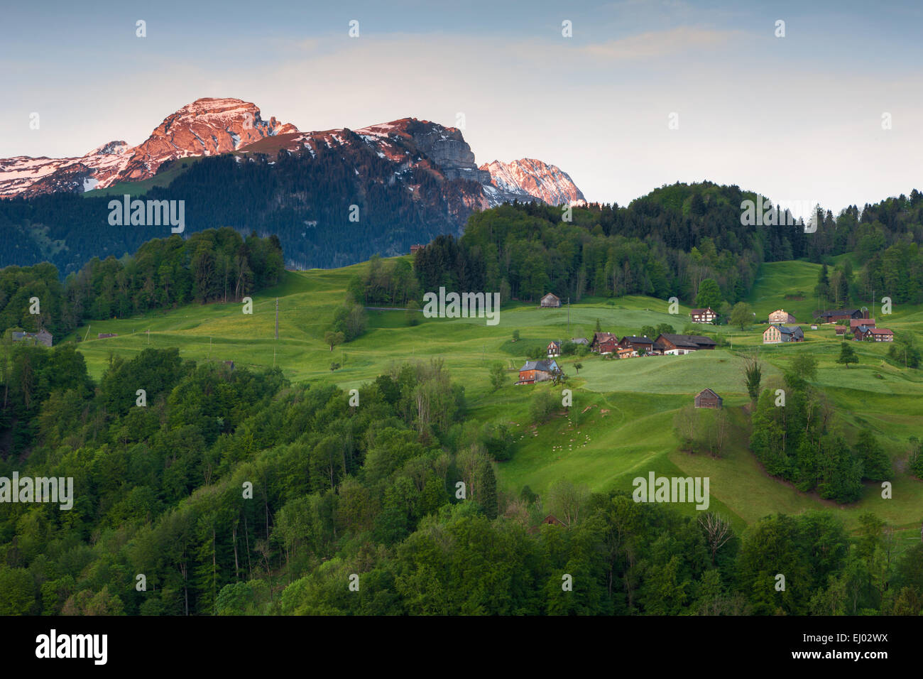 Grabserberg, Grabs mountain, Switzerland, Europe, canton St. Gallen, Rhine Valley, morning light - Stock Image