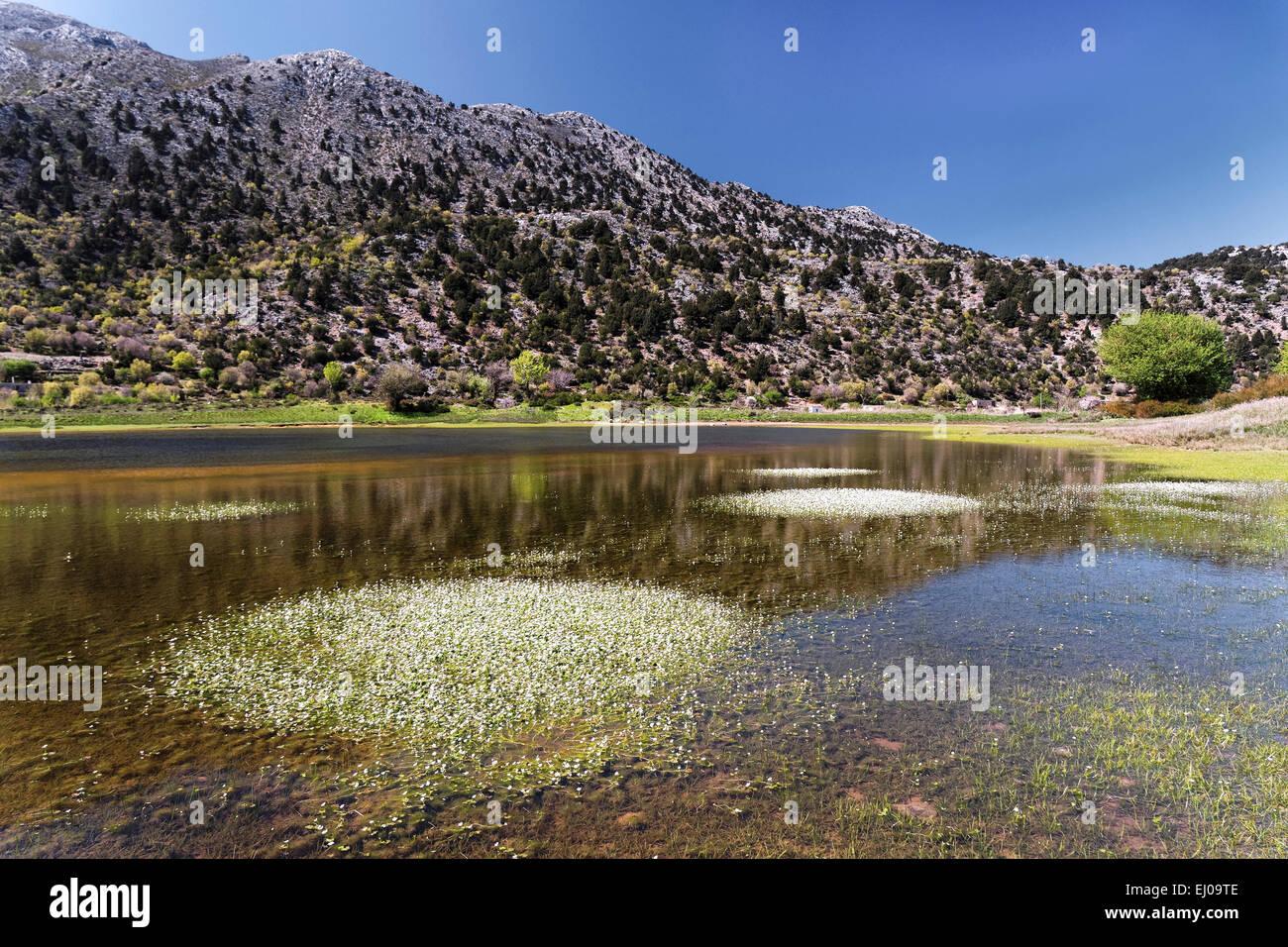 Spring, Greece, Europe, crowfoot, plateau, island, isle, Crete, Lefka Ori, Mediterranean, nature, Omalos, province - Stock Image