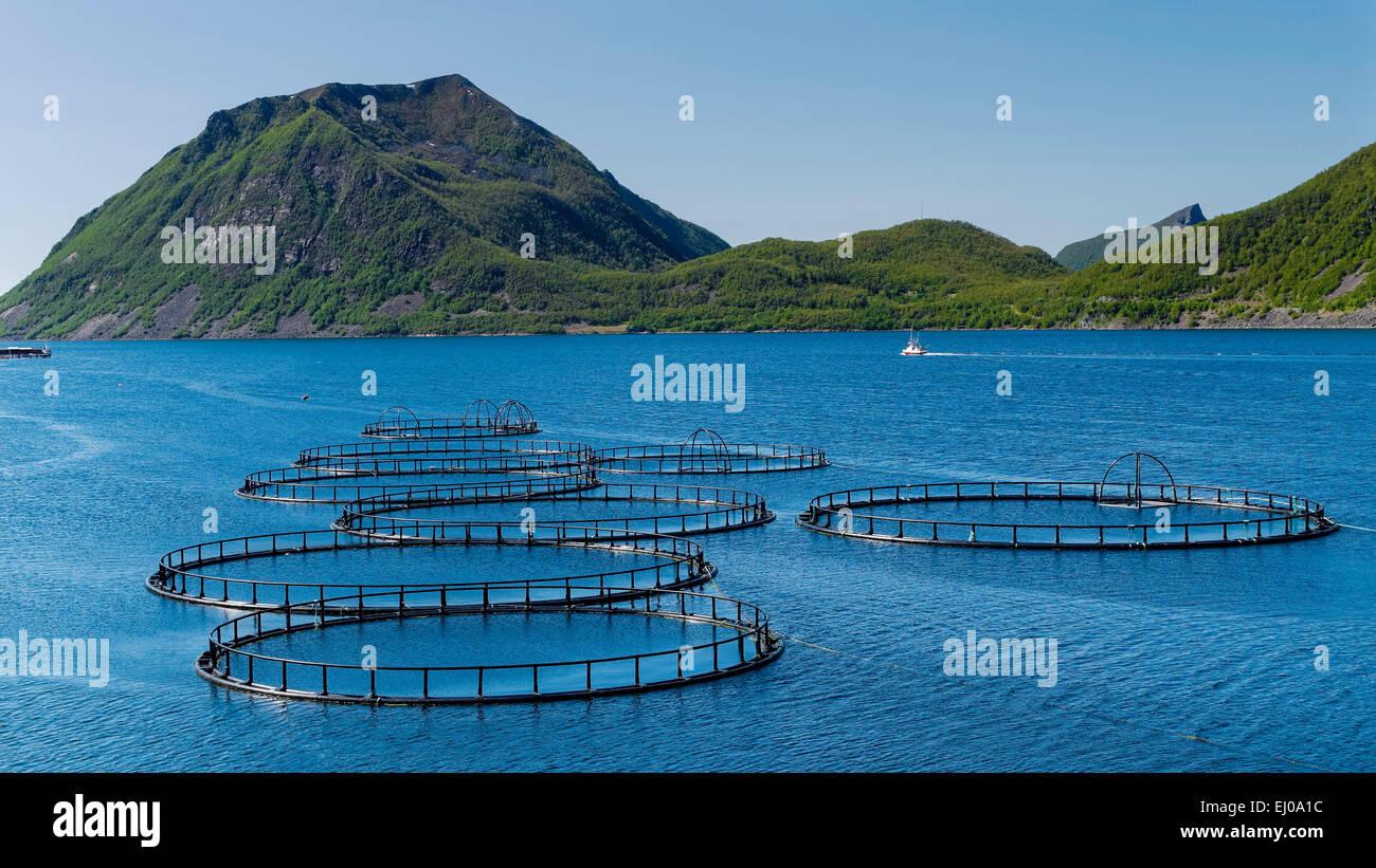 Fish, pisciculture, fjord, mountains, coast, costal, range, salmon, salmon breeding, scenery, landscape, sea, North - Stock Image