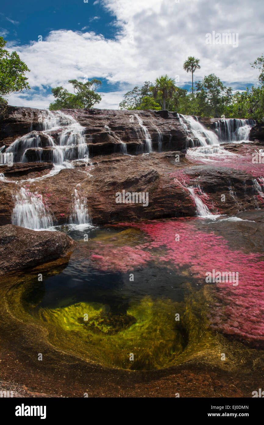 River, Flow, brook, body of water, nature, water, South America, Latin America, Colombia, red, colorful, canyon, - Stock Image