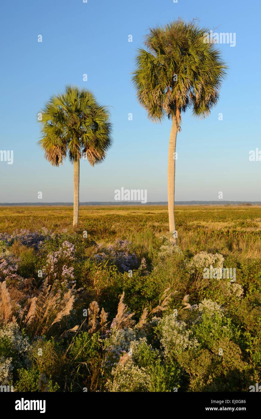 USA, Florida, Alachua County, Paynes Prairie Preserve, State Park, near Gainesville - Stock Image