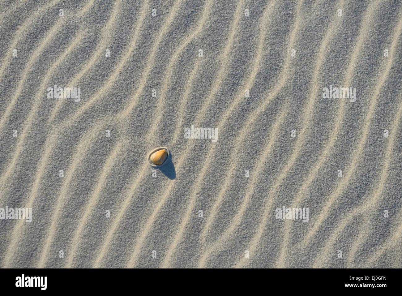 USA, Florida, Franklin County, Gulf of Mexico, Apalachicola, St. George Island, State Park, sea shell, sand, dune, Stock Photo