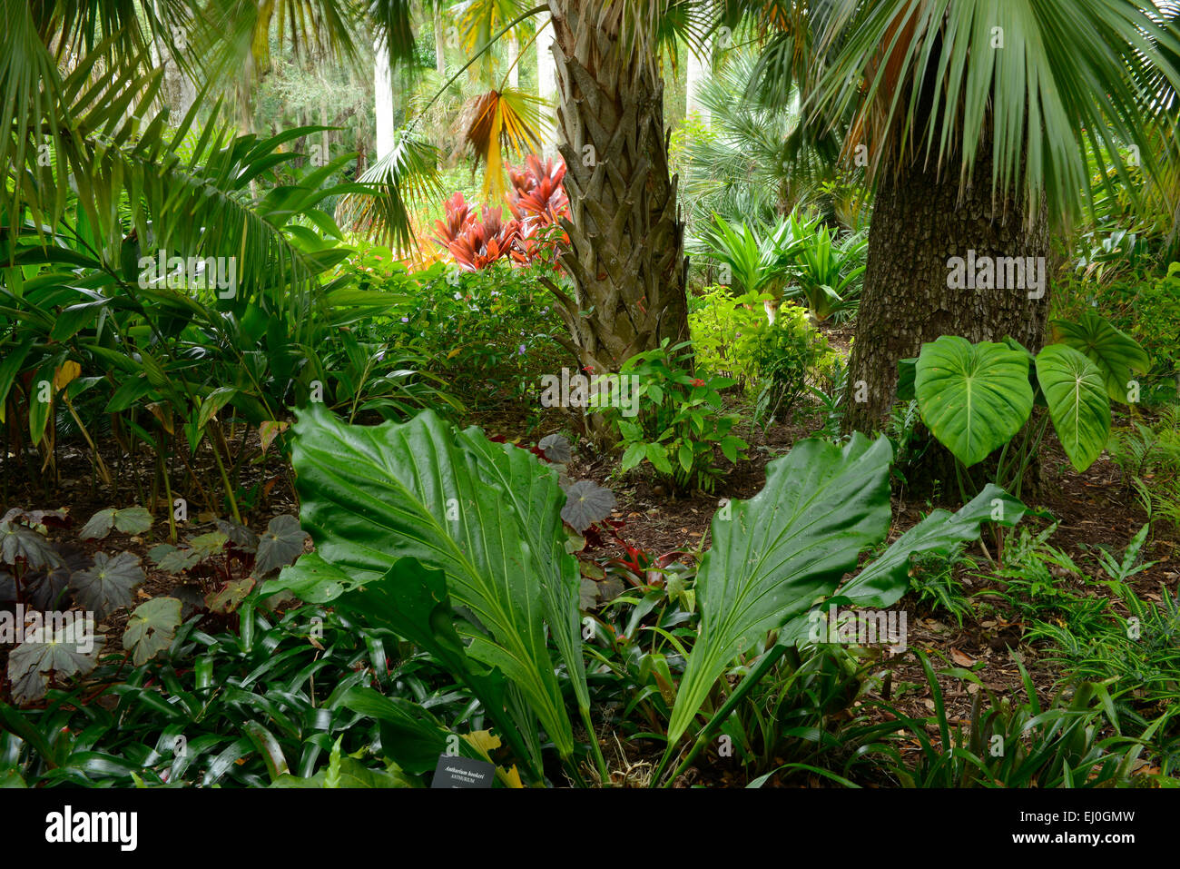 USA, Florida, Indian River County, Vero Beach, McKee, Botanical ...