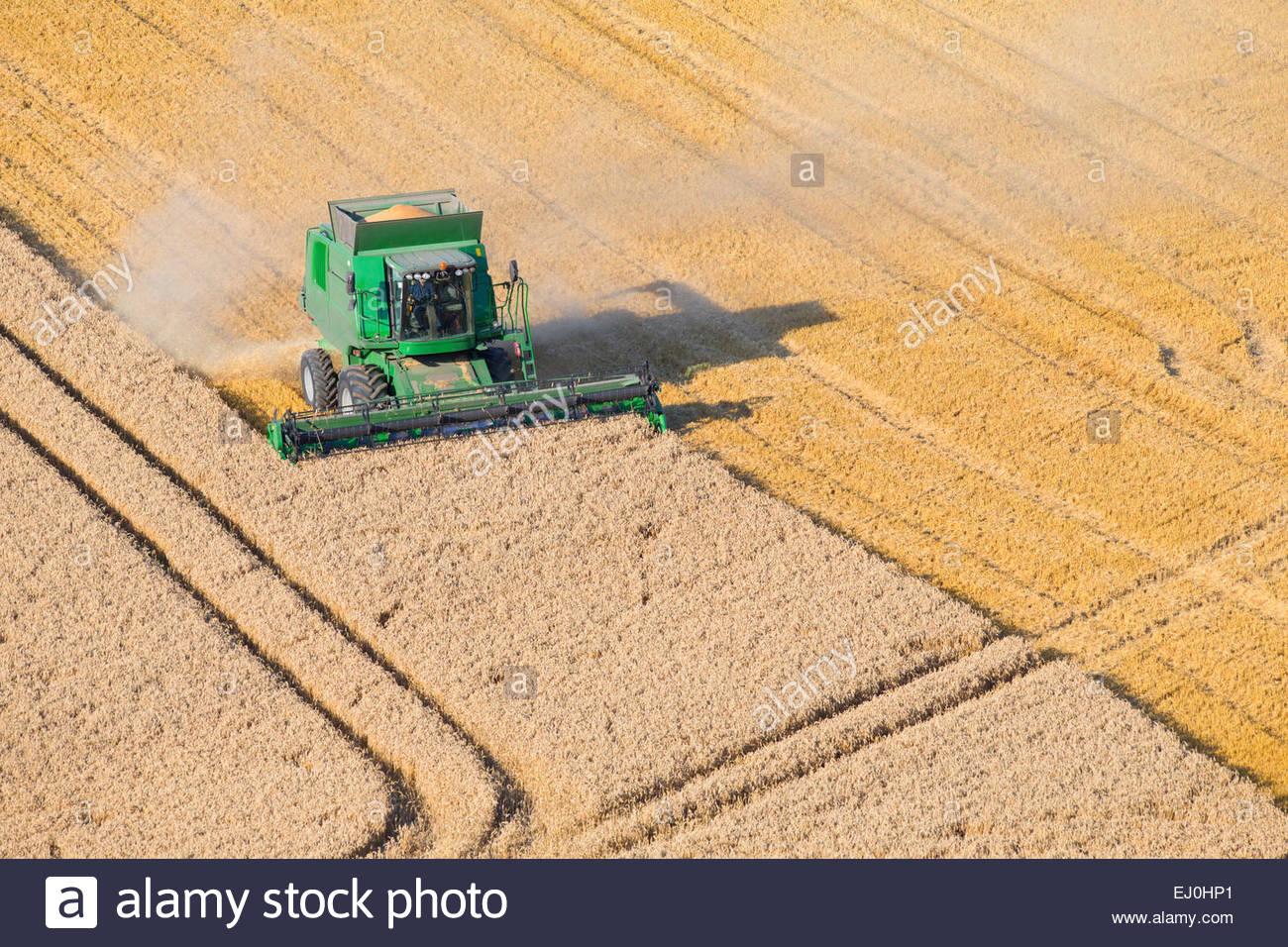 Combine harvester, harvesting wheat in rural field Stock Photo