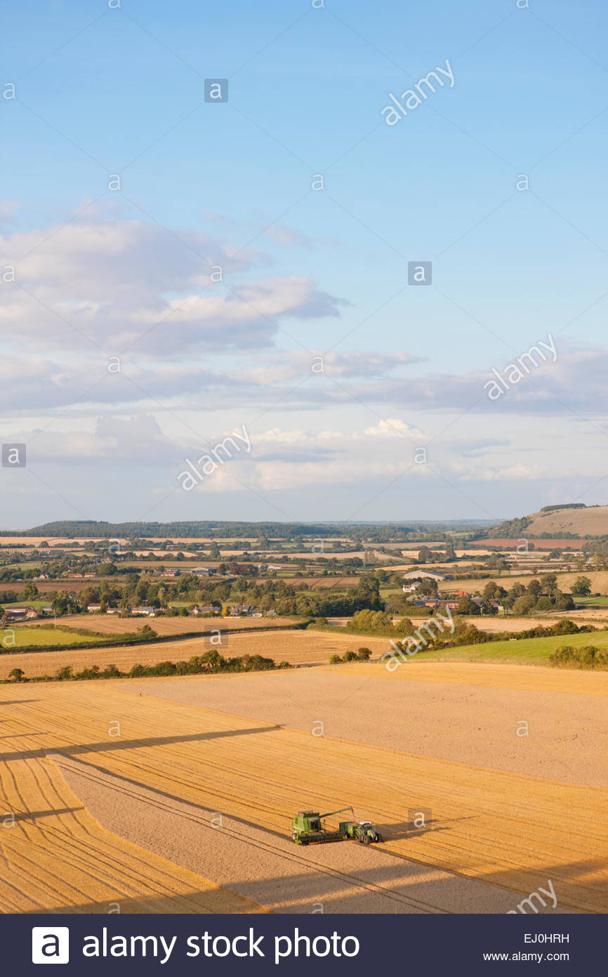 Rural landscape with Combine harvester, harvesting wheat - Stock Image