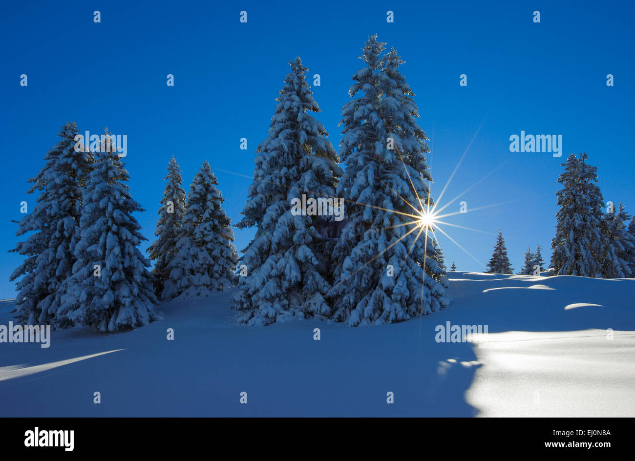 Tree, trees, spruce, spruces, Flumserberge, Flums mountain, mountains, back light, Heidiland, sky, snow, Switzerland, - Stock Image