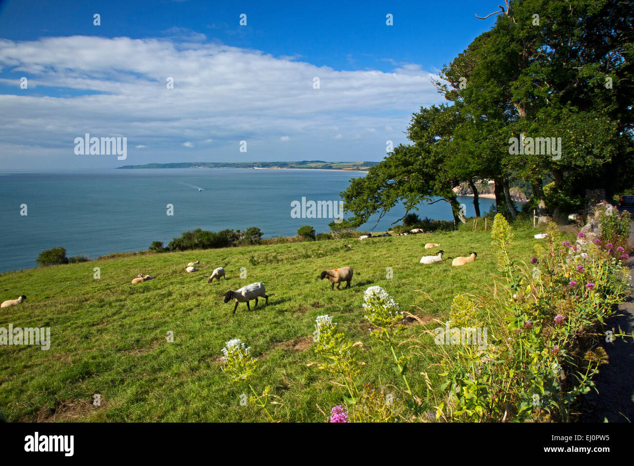 Start bay, Blackpool sands, south, Devon, South-West England, Britain, UK, Europe, British, English channel, south - Stock Image