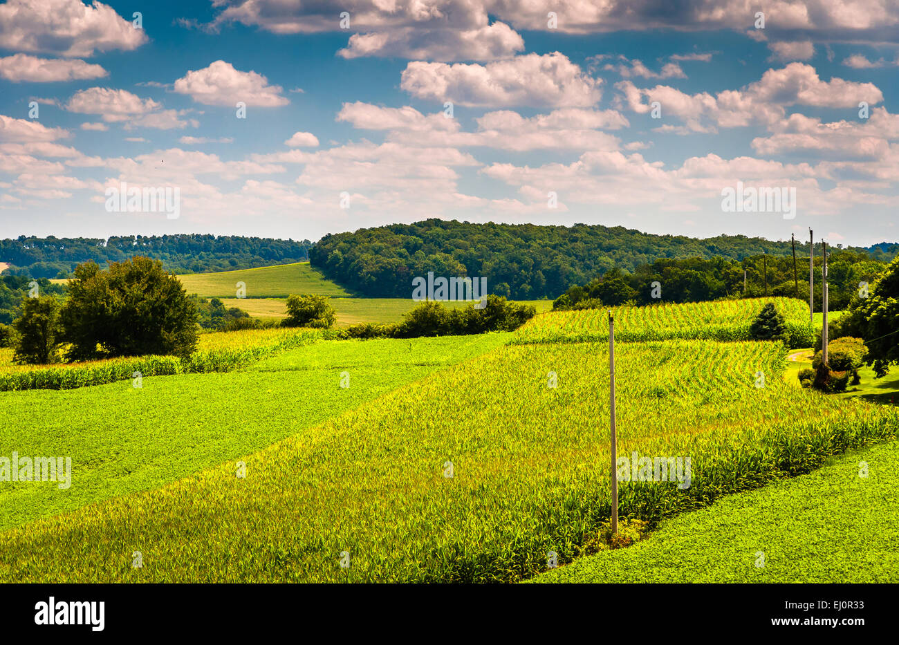View of corn fields and rolling hills in rural York County ...