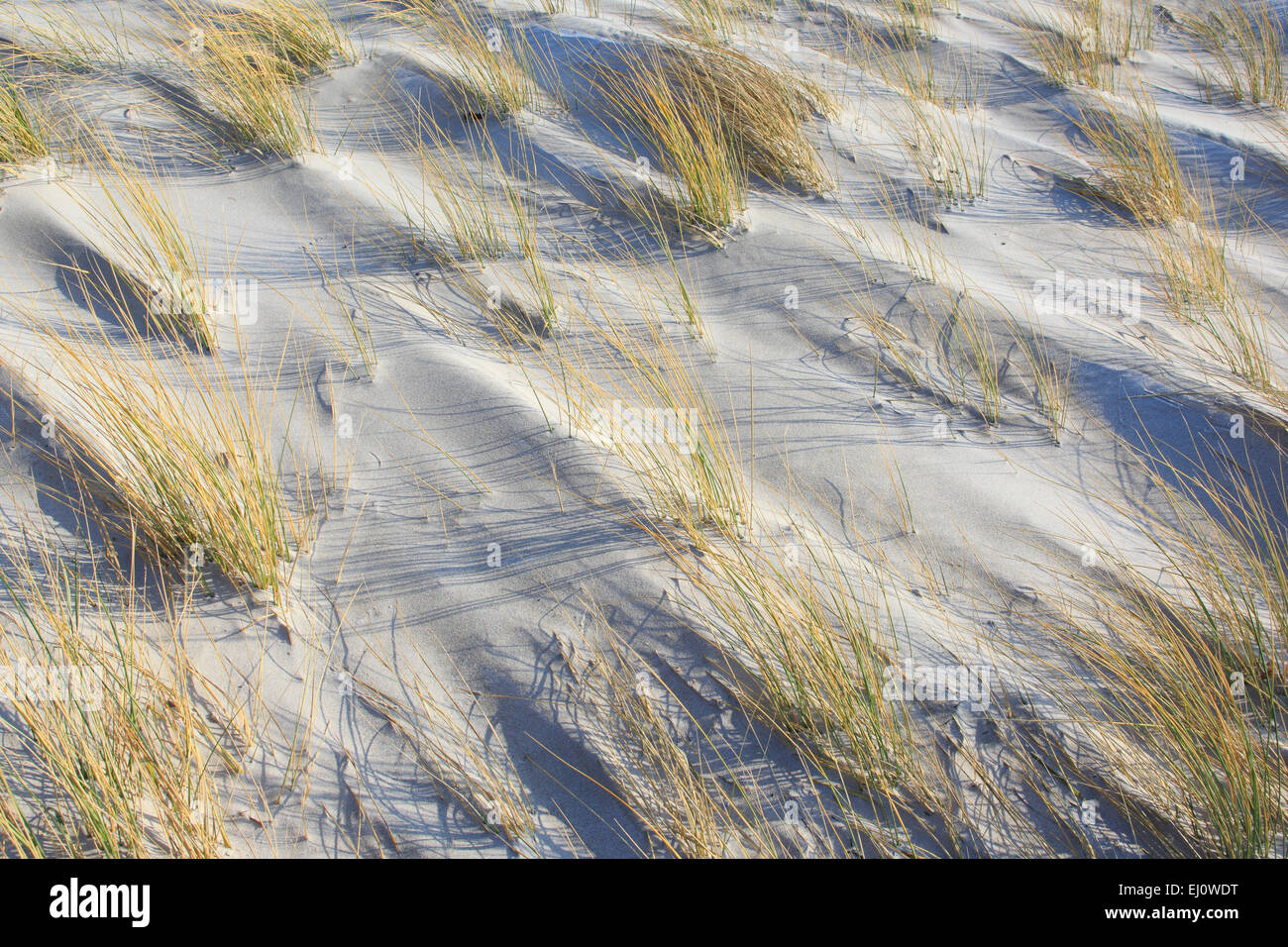 Detail, Germany, Europe, dune, dune grass, blade of grass, Helgoland, coastal vegetation, sea, seashore, pattern, - Stock Image