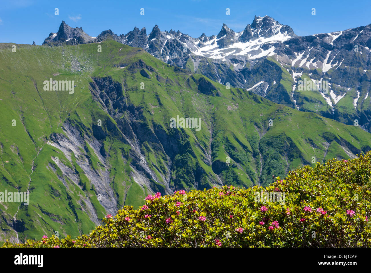 View, horn, Switzerland, Europe, canton St. Gallen, area of Sargans, Weisstannental, gray horns, Alpine roses - Stock Image