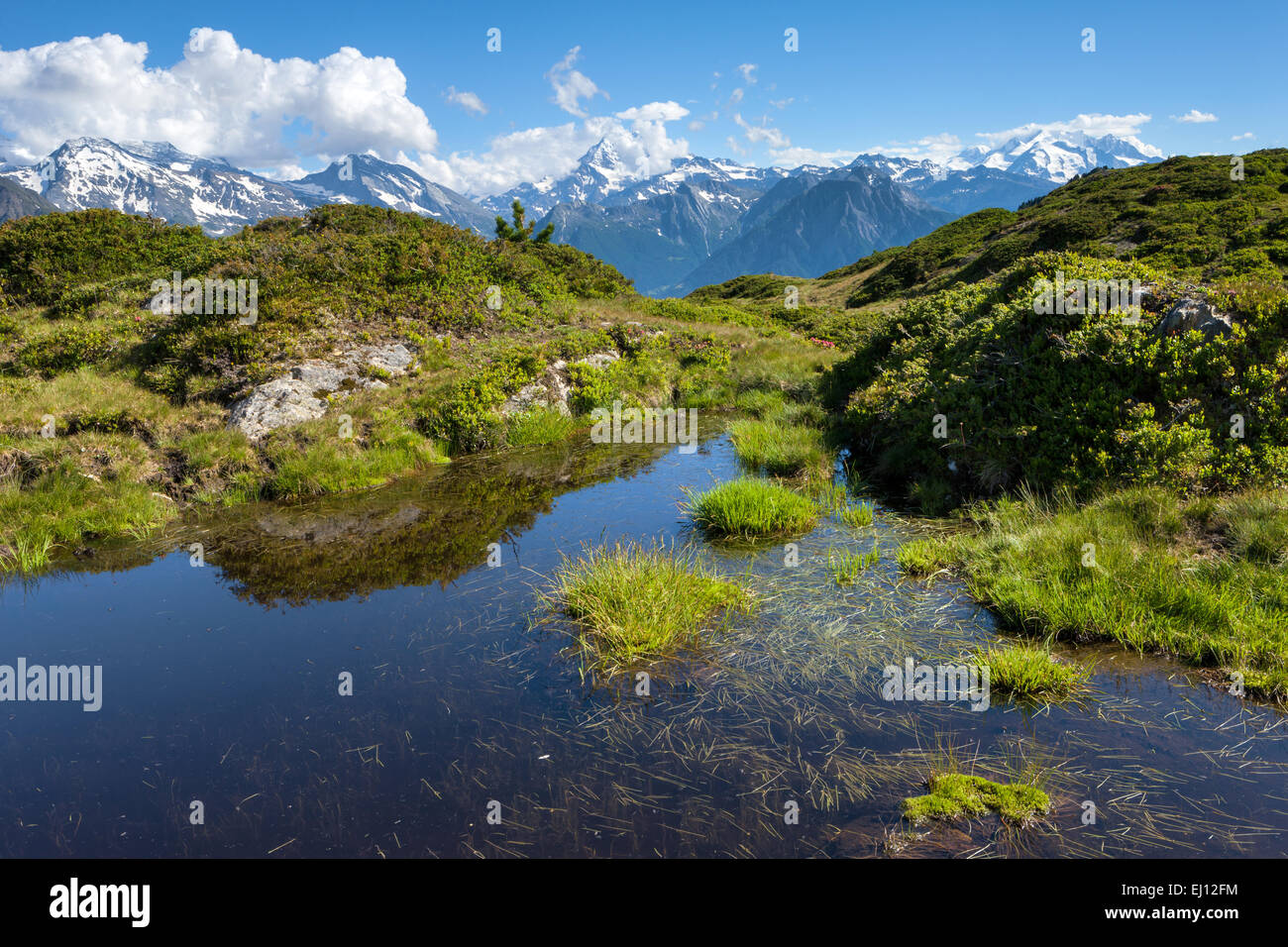 Hohfluh, Switzerland, Europe, canton, Valais, Wallis, Aletsch area, pool, puddle, - Stock Image