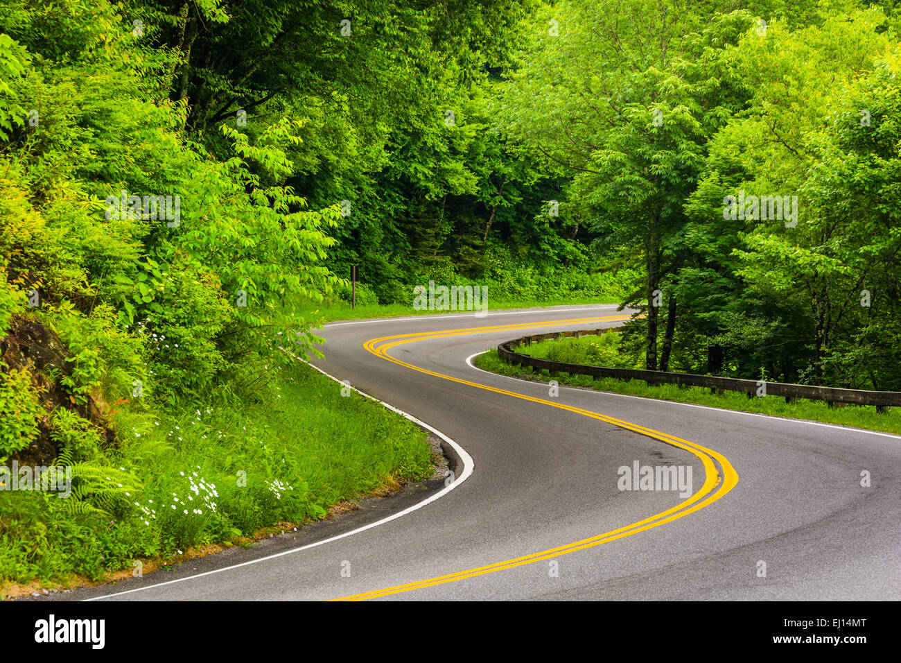 Curve on Newfound Gap Road at Great Smoky Mountains National Park, Tennessee. - Stock Image