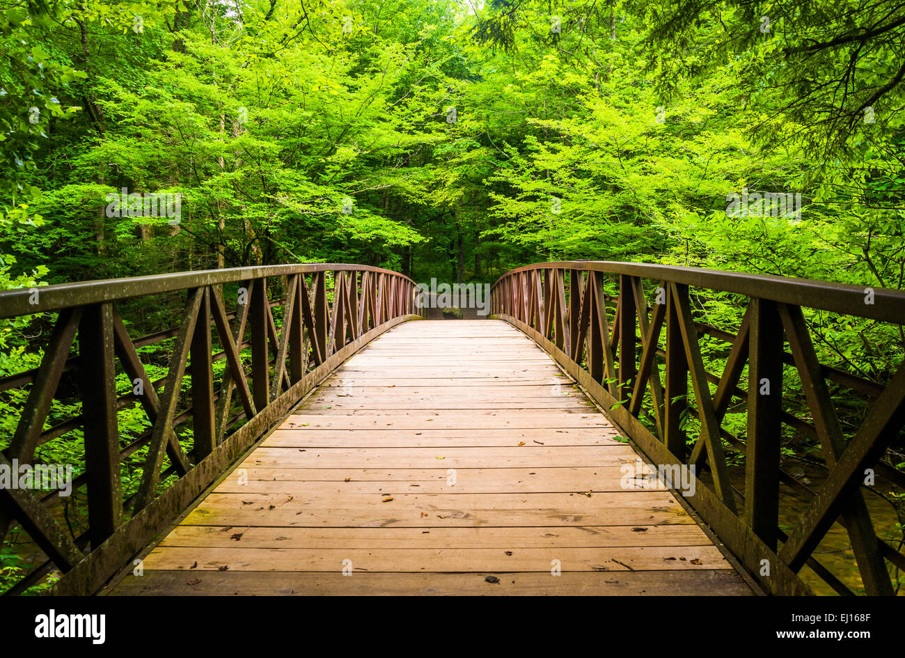Walking bridge over a stream, at Great Smoky Mountains National Park, Tennessee. - Stock Image