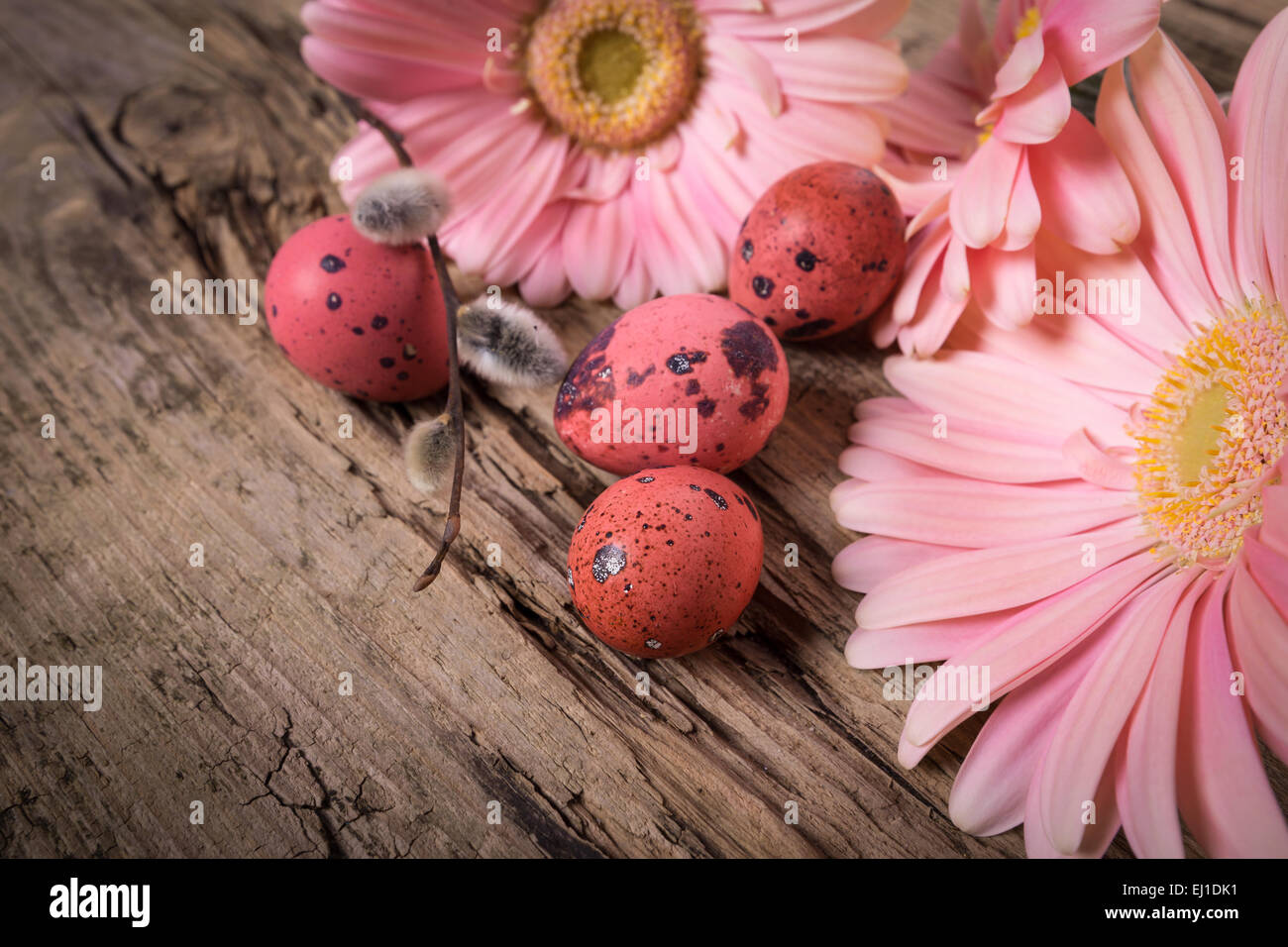 Easter eggs in the nest with gerbera daisy flowers Stock Photo ...