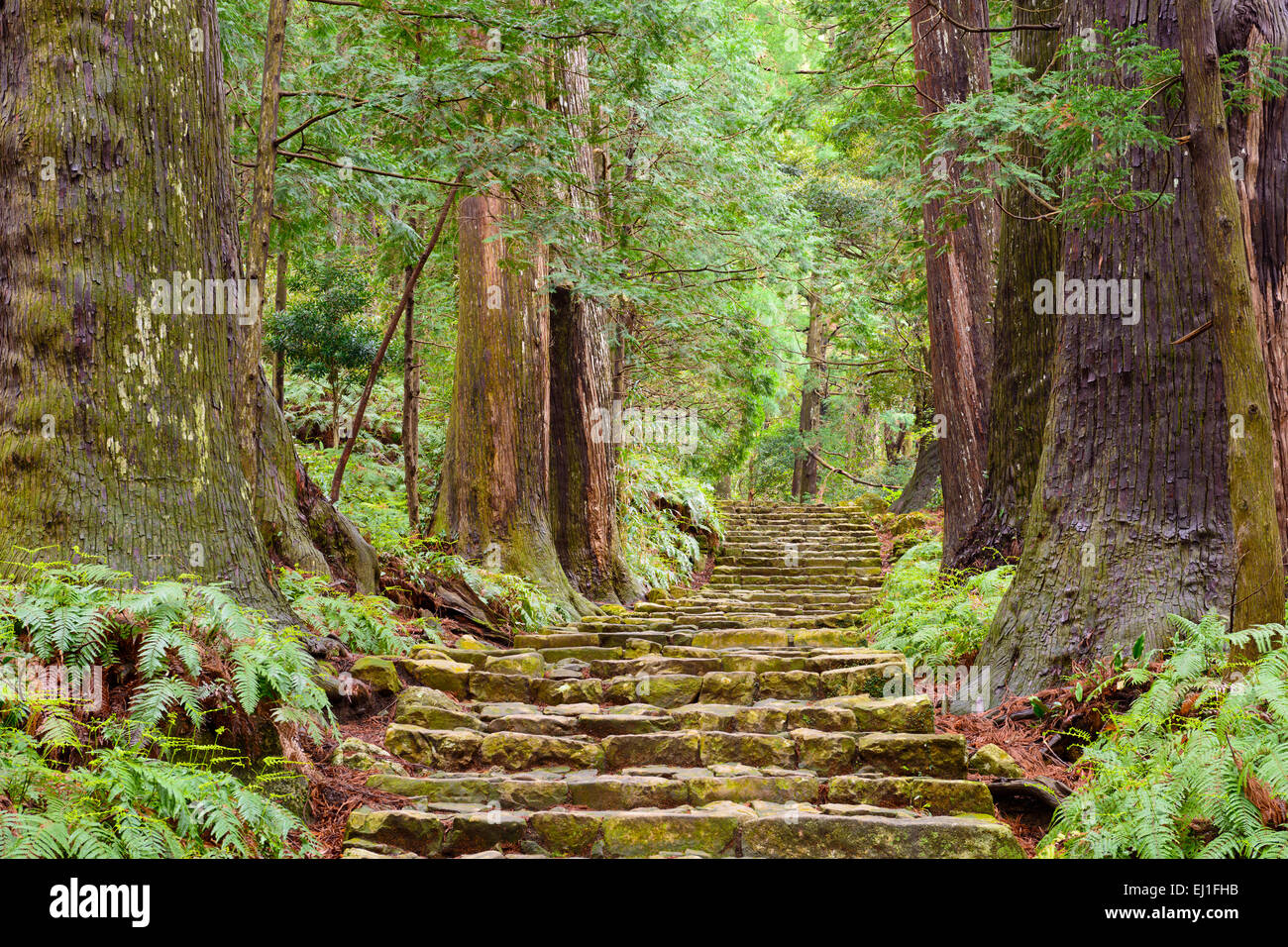 Kumano Kodo at Daimon-zaka, a sacred trail designated as a UNESCO World Heritage site in Nachi, Wakayama, Japan. Stock Photo