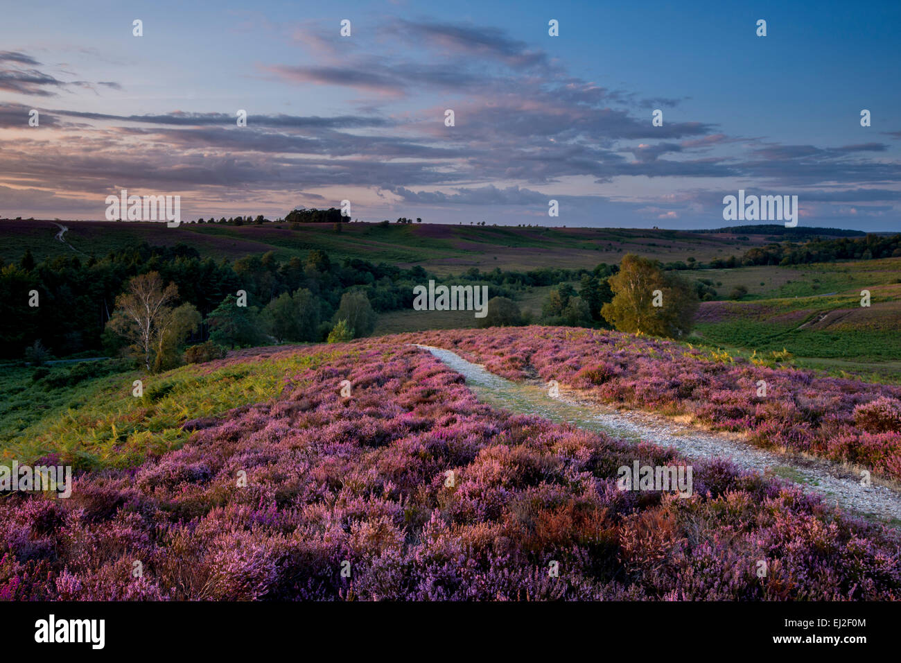 A view of Rockford Common in the New Forest. - Stock Image