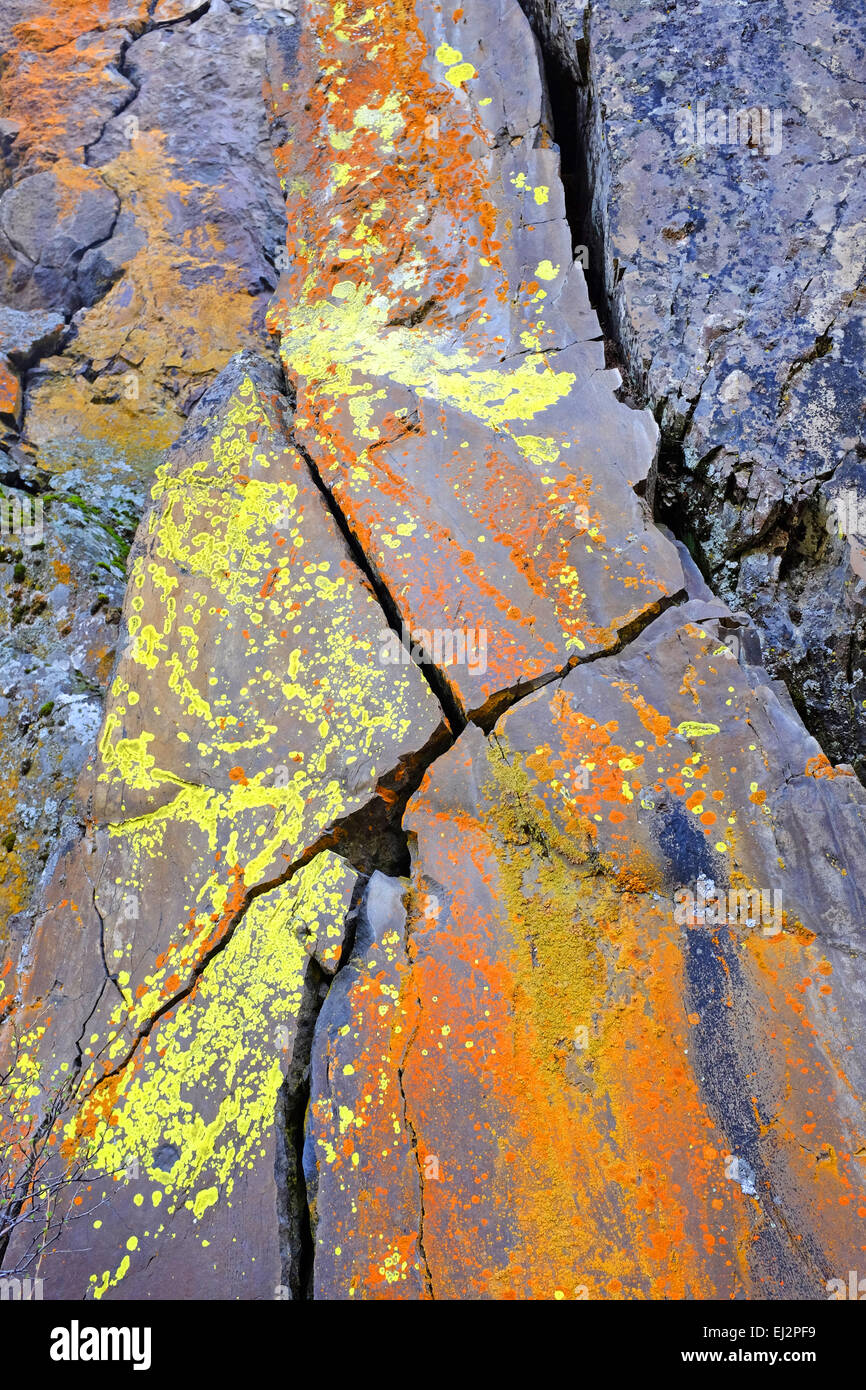 Brightly colored lichens decorate a large basalt cliff face in the foothills of the Cascade Mountains of central - Stock Image