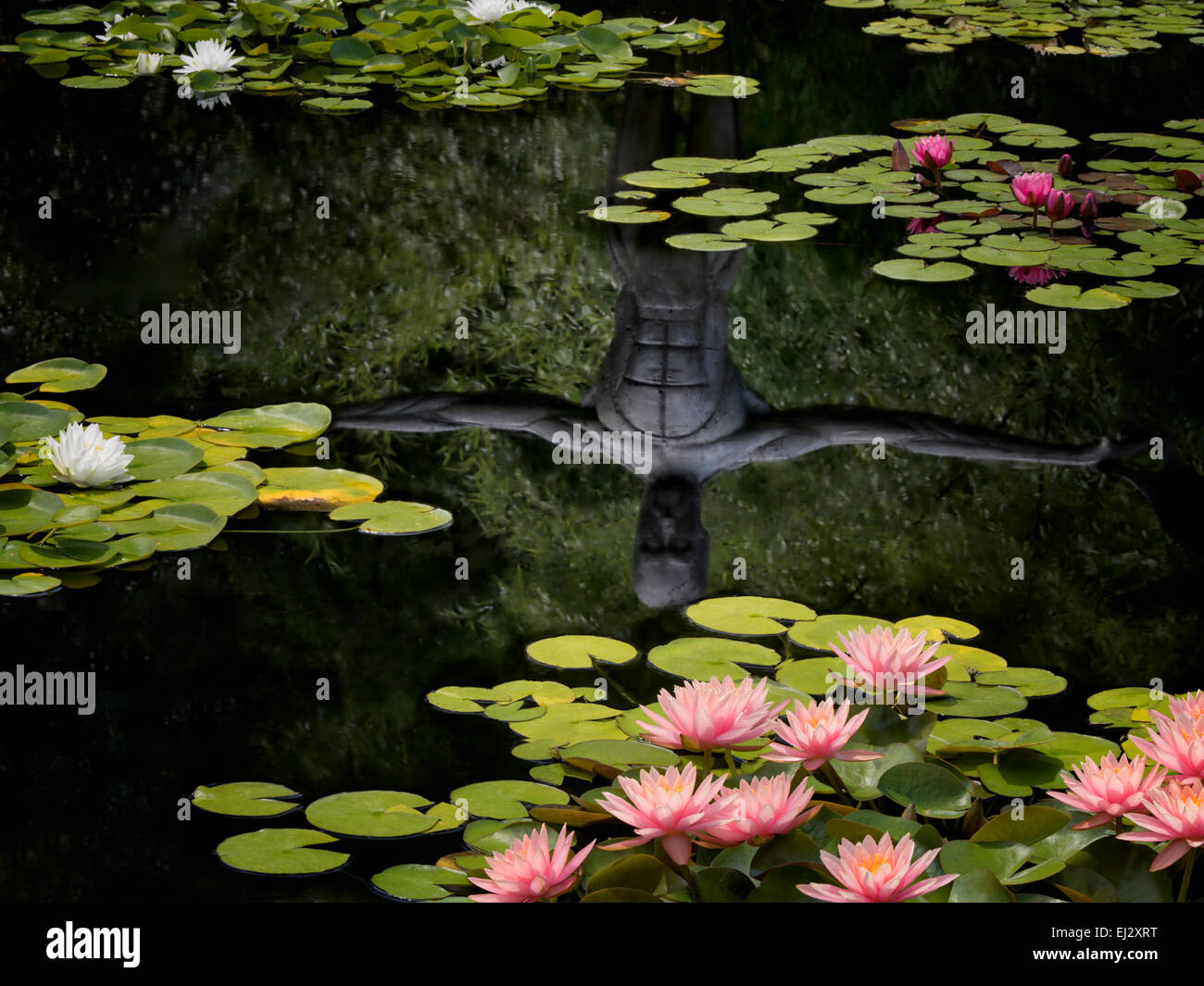 Waterlilies in pond with reflection of sculpture. Oregon - Stock Image