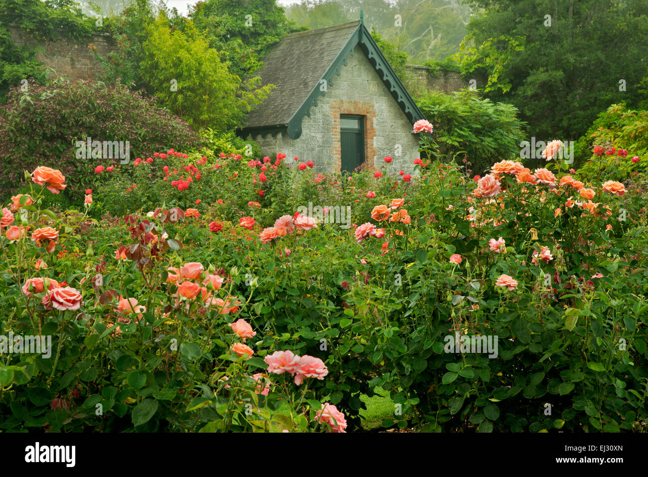 Rose garden and cottage. Gardens at Domoland Castle, Ireland - Stock Image