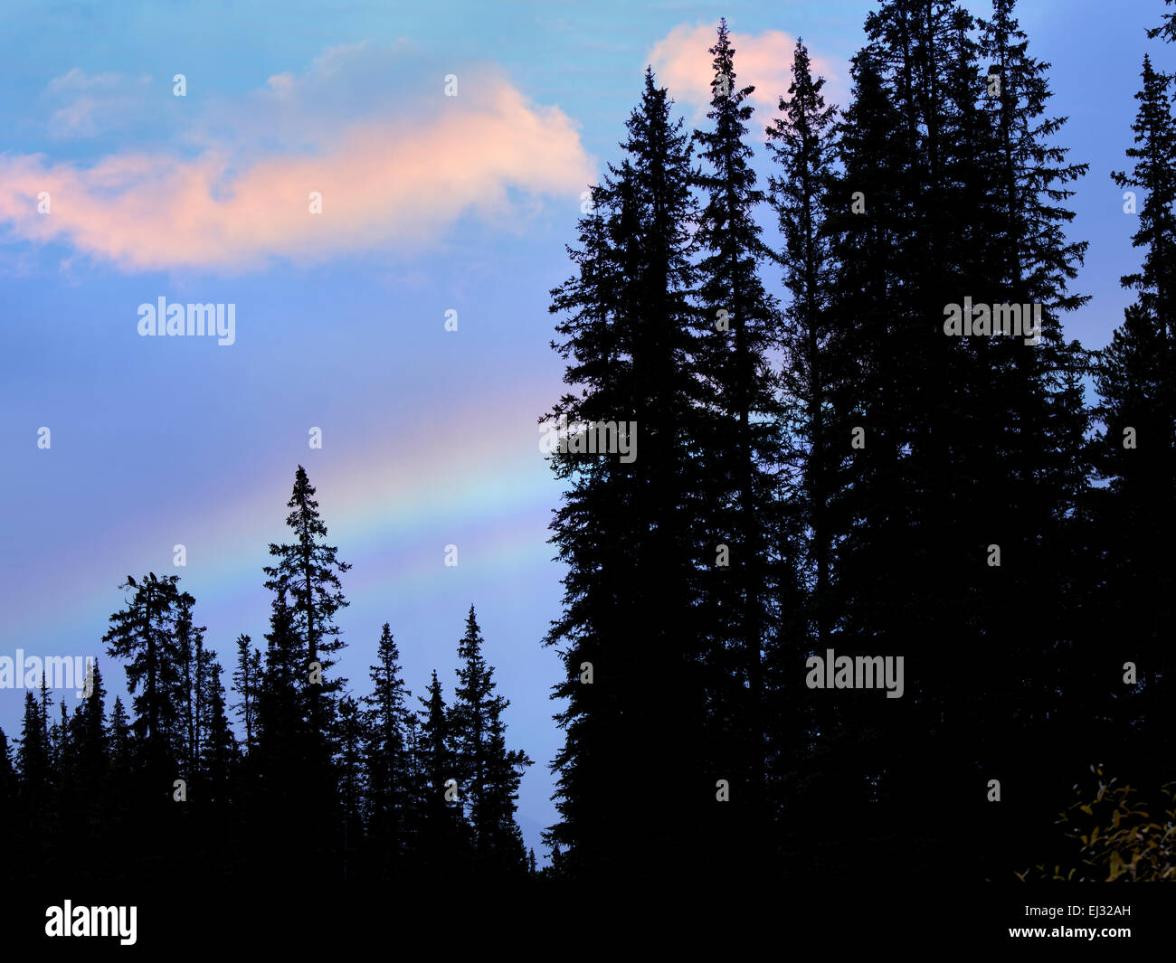 Rainbow over trees. Banff National Park, Canada - Stock Image