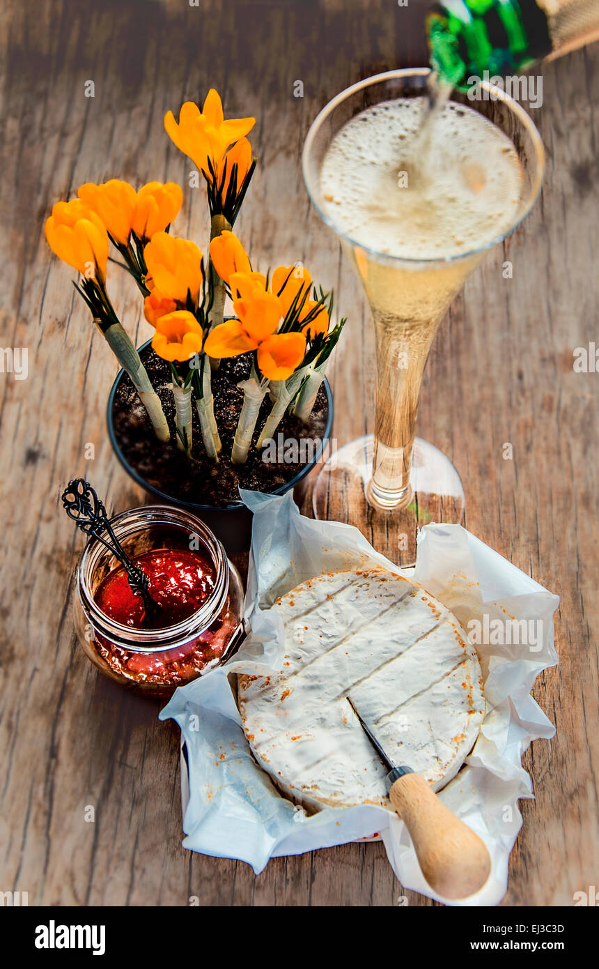 Camembert cheese with Mineola and tangerine jam, champagne and crocuses - Stock Image