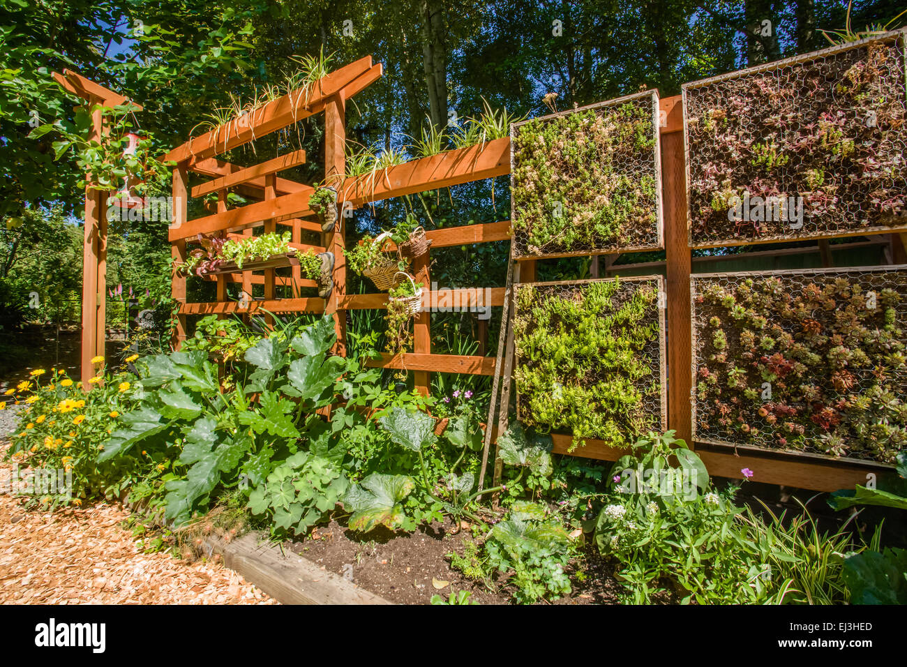 Vertical Vegetable Garden Growing On A Beautiful Wooden Trellis In