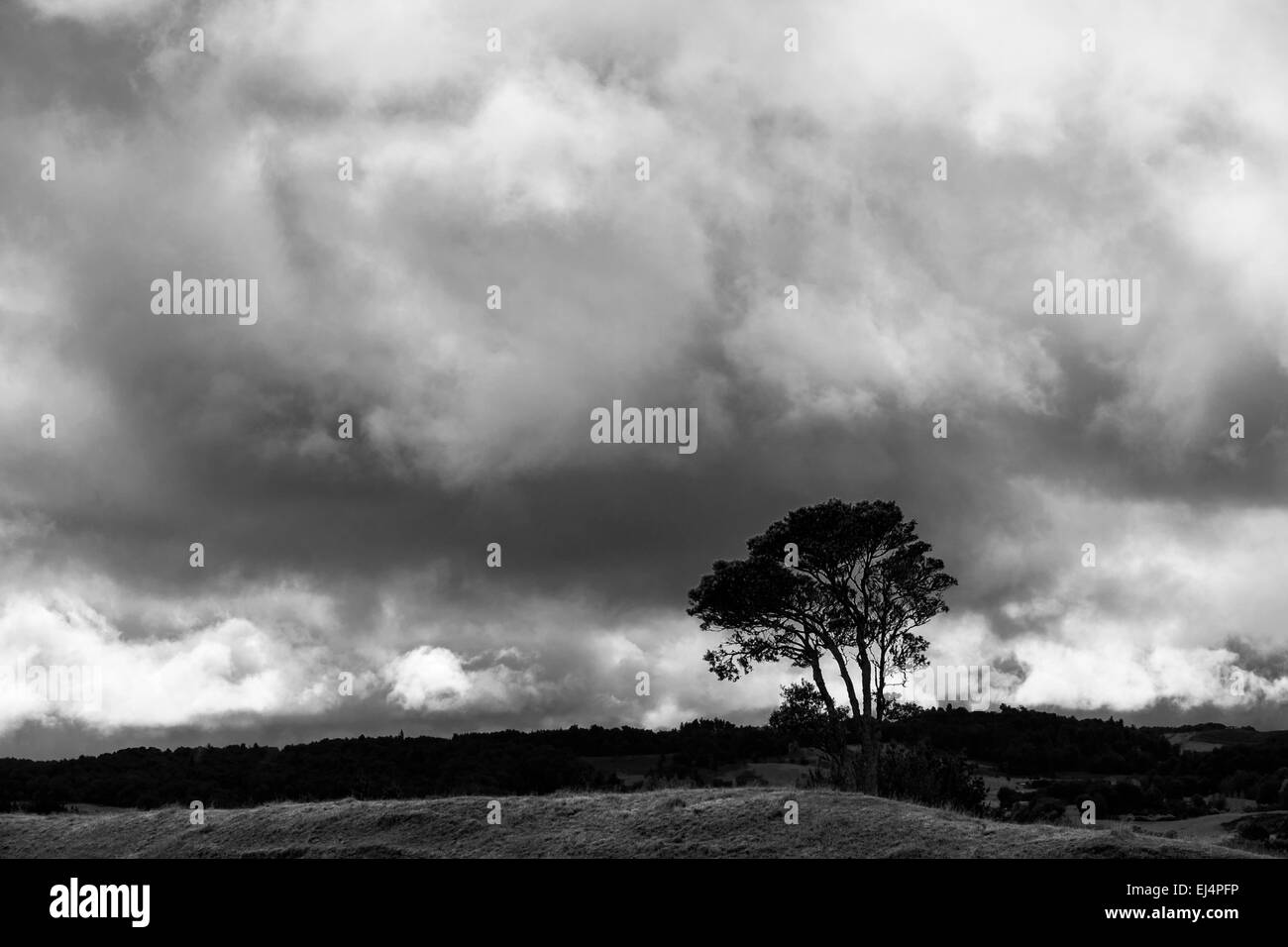 Stormy skies over rolling countryside and trees along state highway 36 near Oropi in New Zealand. Color version Stock Photo