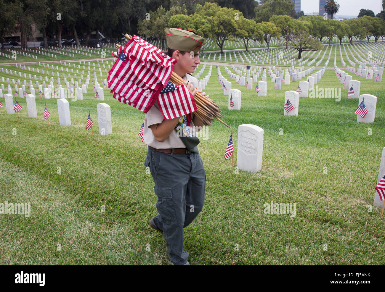 Boyscout placing 85, 000 US Flags at Annual Memorial Day Event, Los Angeles National Cemetery, California, USA - Stock Image