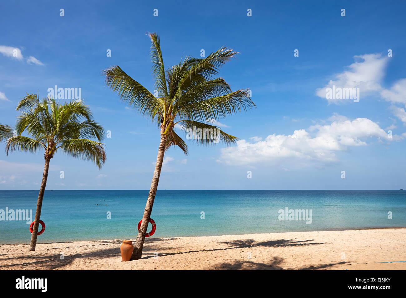 Palm trees growing on the sandy beach at Vinpearl Resort, Phu Quoc island, Kien Giang Province, Vietnam. - Stock Image