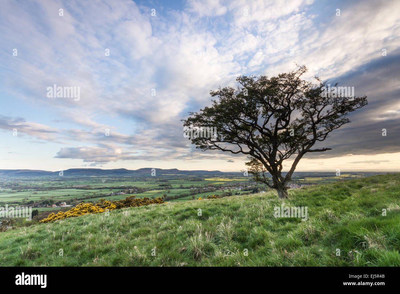 A lone hawthorn tree on the side of a hill overlooking the distant hills of the North Yorkshire Moors on a beautiful - Stock Image